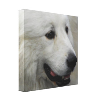 I Love Great Pyrenees Canvas Print