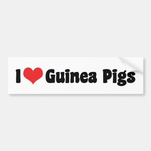 I Love Guinea Pigs Bumper Sticker Car Bumper Sticker