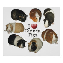 I Love Guinea Pigs Poster