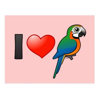 I Love Harlequin Macaws Postcard
