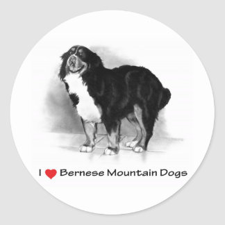 I Love (Heart) Bernese Mountain Dogs Stickers