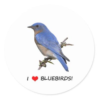 I Love (heart) Bluebirds Stickers