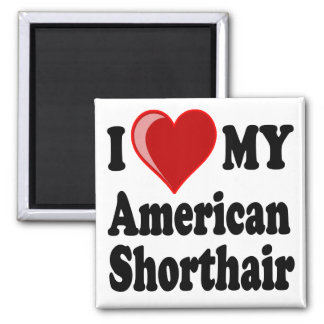 I Love (Heart) My American Shorthair Cat Magnets