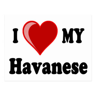 I Love (Heart) My Havanese Dog Postcard