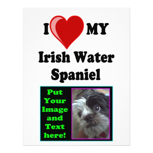 "I Love (Heart) My Irish Water Spaniel Dog 8.5"" X 11"" Flyer"