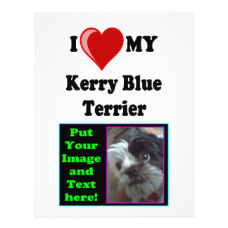 I Love (Heart) My Kerry Blue Terrier Dog Flyer