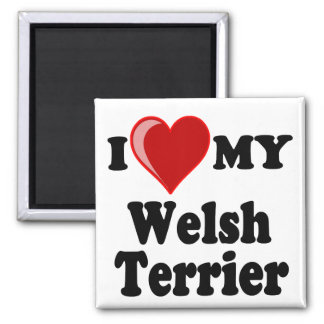 I Love (Heart) My Welsh Terrier Dog 2 Inch Square Magnet