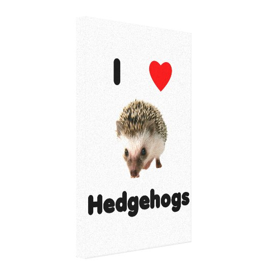 I love hedgehogs canvas print