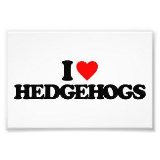 I LOVE HEDGEHOGS PHOTOGRAPH