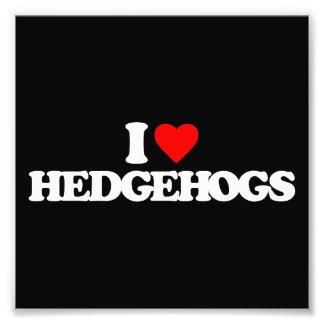 I LOVE HEDGEHOGS PHOTO