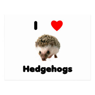I love hedgehogs post cards