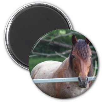I Love Horses! 2 Inch Round Magnet