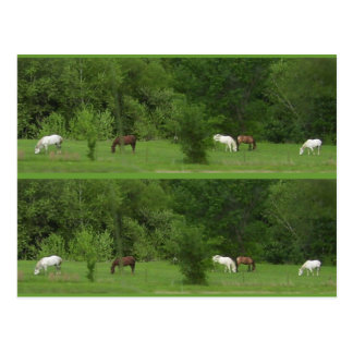 I Love Horses! Bookmarkers - Customize! Postcard