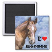 I love Horses Magnet