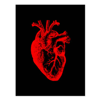 I love / I heart heart anatomy Postcard
