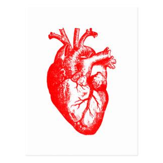 I love / I heart heart anatomy Postcard