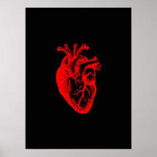 I love / I heart heart anatomy Poster