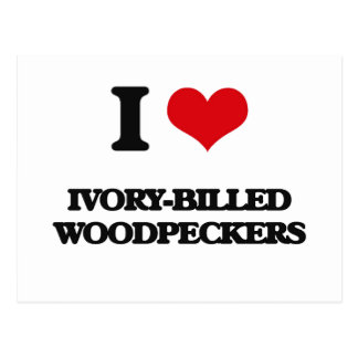 I love Ivory-Billed Woodpeckers Postcard