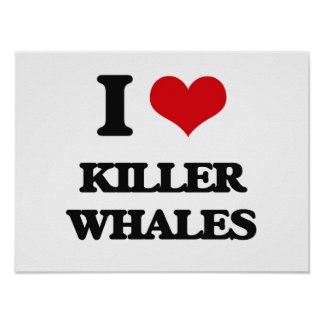 I love Killer Whales Posters