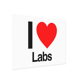 i love labs stretched canvas prints