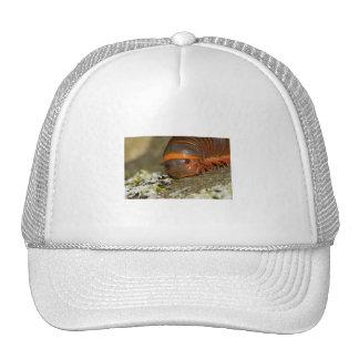 I Love Lichen Trucker Hat