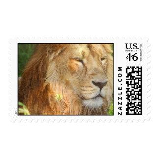 I Love Lions Postage Stamp