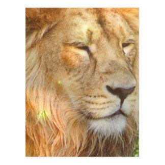 I Love Lions Postcard