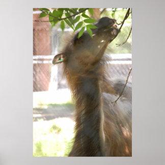 I Love Llamas Poster