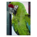 I love macaws! greeting card
