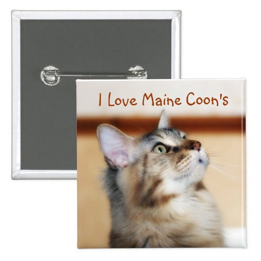 I Love Maine Coon's Badge - Maine Coon Kitten Pinback Buttons