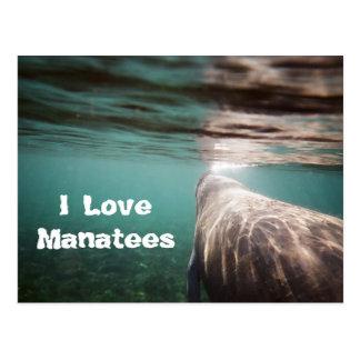 I Love Manatees Postcard