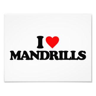 I LOVE MANDRILLS PHOTO ART