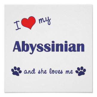 I Love My Abyssinian (Female Cat) Print
