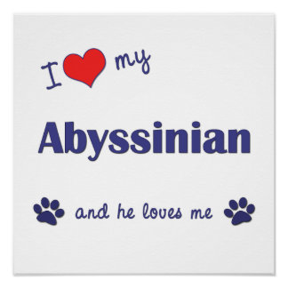 I Love My Abyssinian Male Cat Print