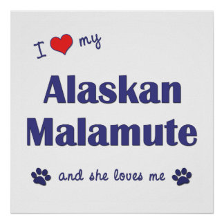 I Love My Alaskan Malamute (Female Dog) Posters