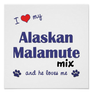 I Love My Alaskan Malamute Mix (Male Dog) Poster