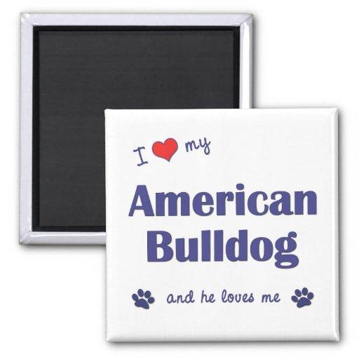 I Love My American Bulldog (Male Dog) Magnets