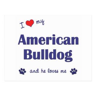 I Love My American Bulldog (Male Dog) Postcard