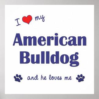 I Love My American Bulldog (Male Dog) Posters
