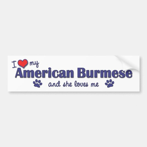 I Love My American Burmese (Female Cat) Bumper Stickers