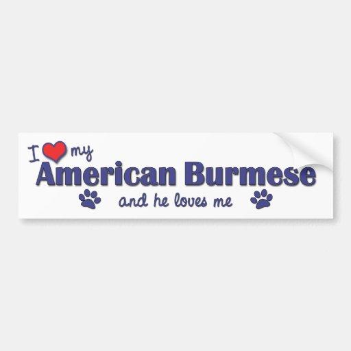 I Love My American Burmese (Male Cat) Bumper Sticker