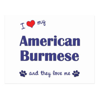 I Love My American Burmese (Multiple Cats) Postcard