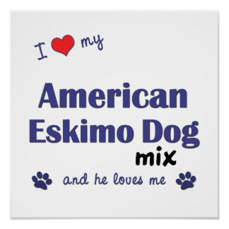 I Love My American Eskimo Dog Mix (He) Poster