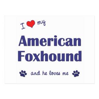 I Love My American Foxhound (Male Dog) Postcard
