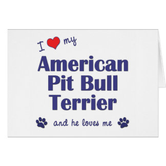 I Love My American Pit Bull Terrier Male Dog Card
