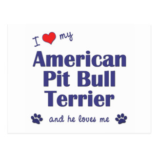 I Love My American Pit Bull Terrier Male Dog Post Cards