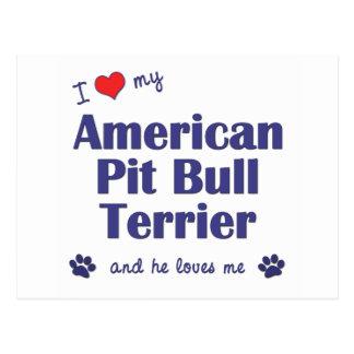 I Love My American Pit Bull Terrier (Male Dog) Postcard