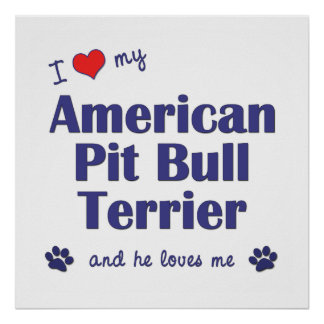 I Love My American Pit Bull Terrier (Male Dog) Poster