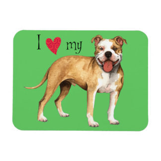 I Love my American Pit Bull Terrier Rectangle Magnets