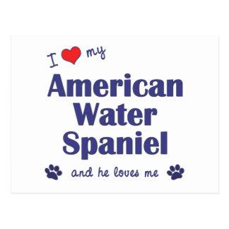 I Love My American Water Spaniel (Male Dog) Postcard